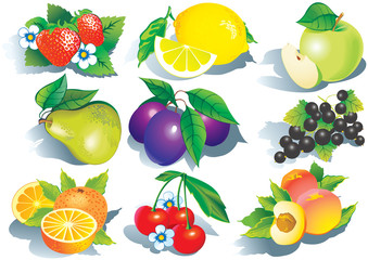 Fruits. Vector art-illustration on a white background.