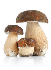 Tre funghi porcini - Three Boletus Edulis mushrooms