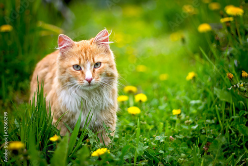 Red  stray cat outdoor in nature