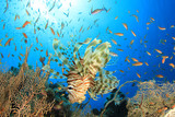 Lionfish and Fan Corals