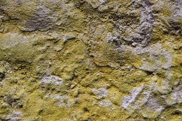 cemento muffa