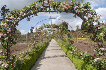apple blossom archway