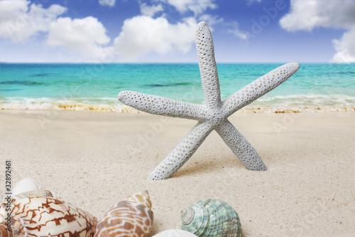 Shell on the Beach - 32892461