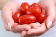 cherry tomatoe betwen the hands