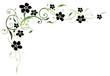 Ranke, flora, Blumen, Blüten, filigran, schwarz, grün