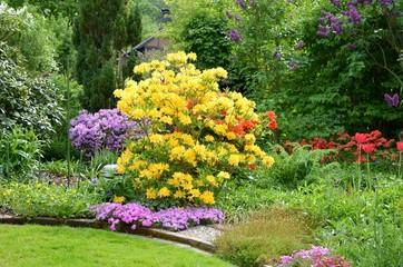 Garten mit Azalee