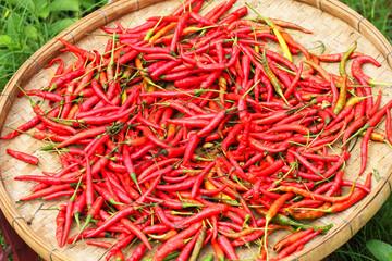 Chilies, Thailand.