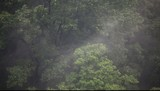 Fog rising in the forest with the rain, hd