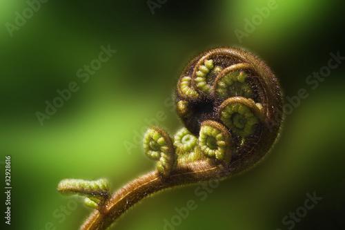 Keuken foto achterwand Nieuw Zeeland Tree fern frond