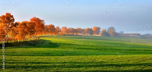 Fototapeten,herbst,landschaft,wiese,bäume