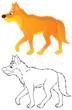 wild dog dingo