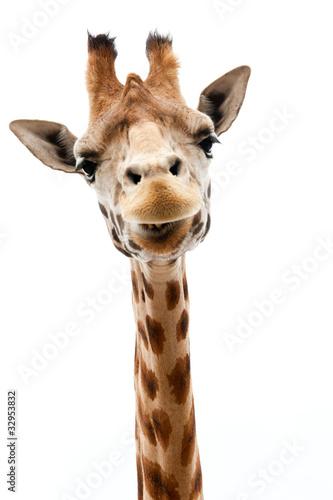 Fotobehang Afrika Funny Giraffe