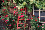 Rosenbeet  Garten