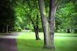 Spring time in park