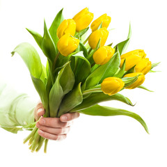 Hand holding yellow tulips