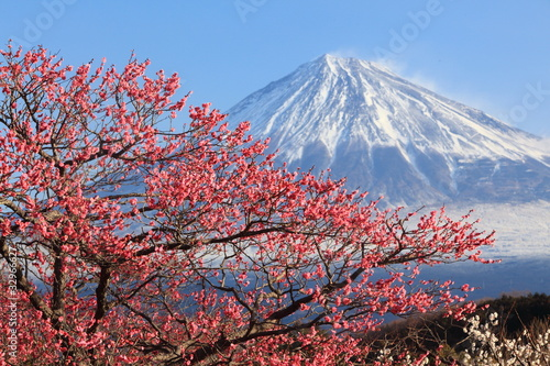 Fototapeten,fuji,mt,berg,berg