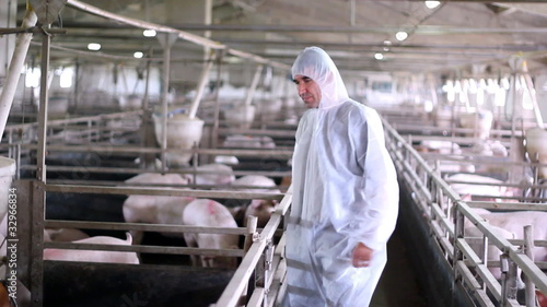 Modern Pig Farm - Veterinarian At Work