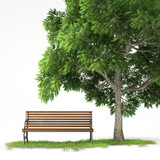 isolated bench under tree