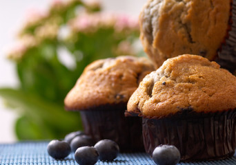 blueberry Muffin on the table, in background a green plant