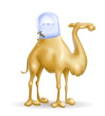 cammello porta acqua