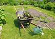 Wheelbarrow in herbaceous garden