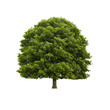 Baum freigestellt
