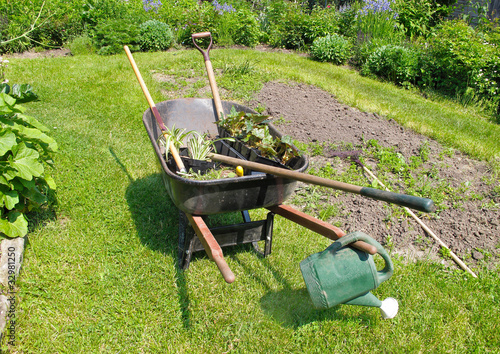 Wheelbarrow in herbaceous garden