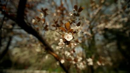It's Easter! Flowery Tree