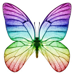 Schmetterling Regenbogenfarben