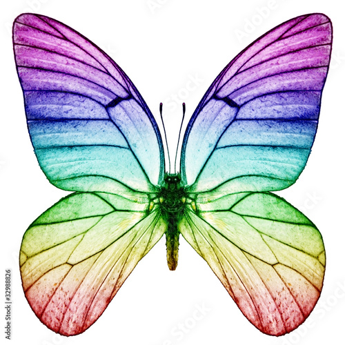Foto op Plexiglas Vlinder Schmetterling Regenbogenfarben