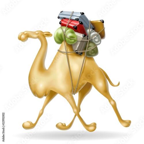 cammello in viaggio