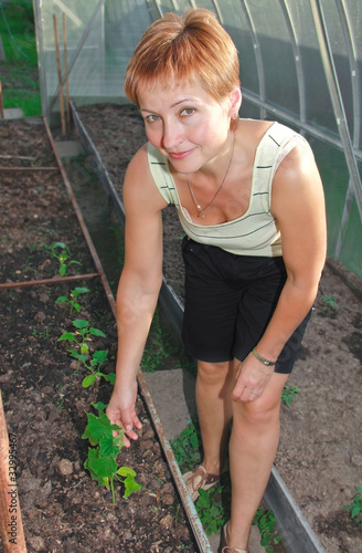 Beautiful smiling woman growing vegetables in hothouse