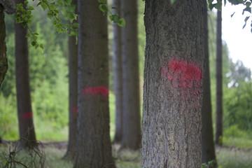 Bäume markieren