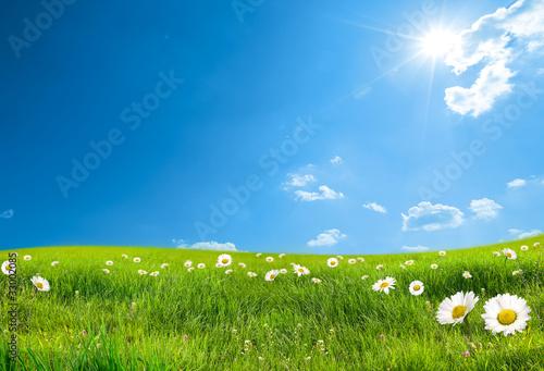 Papiers peints Campagne daisy