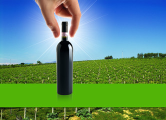vino e viticoltura