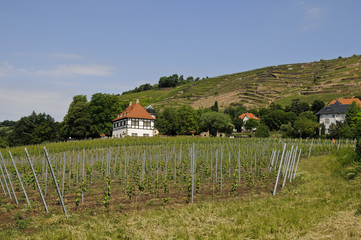 Radebeul, Weingut Hoflößnitz, Sachsen