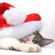 Hübsche Katze versteckt mit Weihnachtsmütze