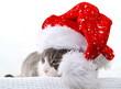 Weihnachten - Katze mit Kappe/ H