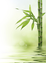 Bamboo border with bokeh and copy space