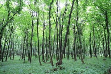 Österreichischer Wald im Sommer