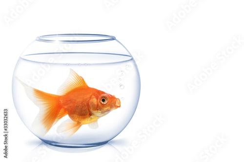 goldfisch im glas stockfotos und lizenzfreie bilder auf. Black Bedroom Furniture Sets. Home Design Ideas