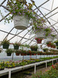 Inside commercial greenhouse with bedding plants