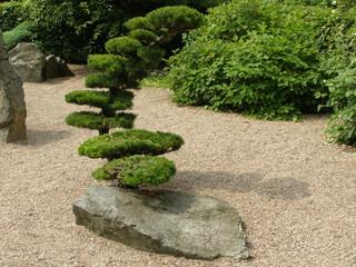 W ogrodzie japońskim