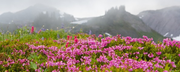 PInk Mountain Heather and Ridges