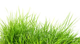 fresh spring green grass i