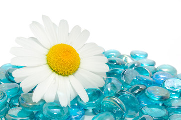 Beautiful Daisy on Blue Glass Stones