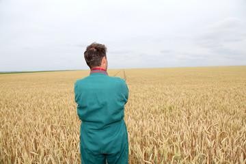 Farmer standing in wheat field in spring season
