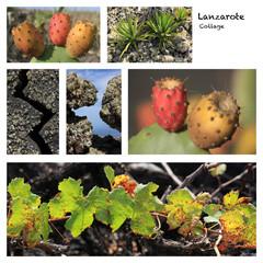 Lanzarote Natur / Collage