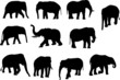collection of elephants silhouettes - vector