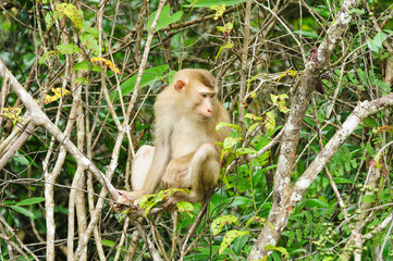 Monkey at Khao Yai National Park, Thailand